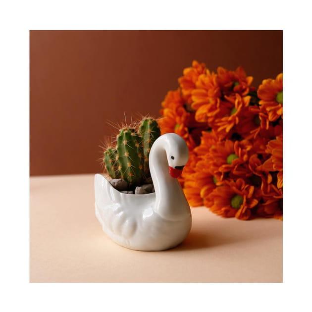 Objet végétal vintage deThe Blond Cactus