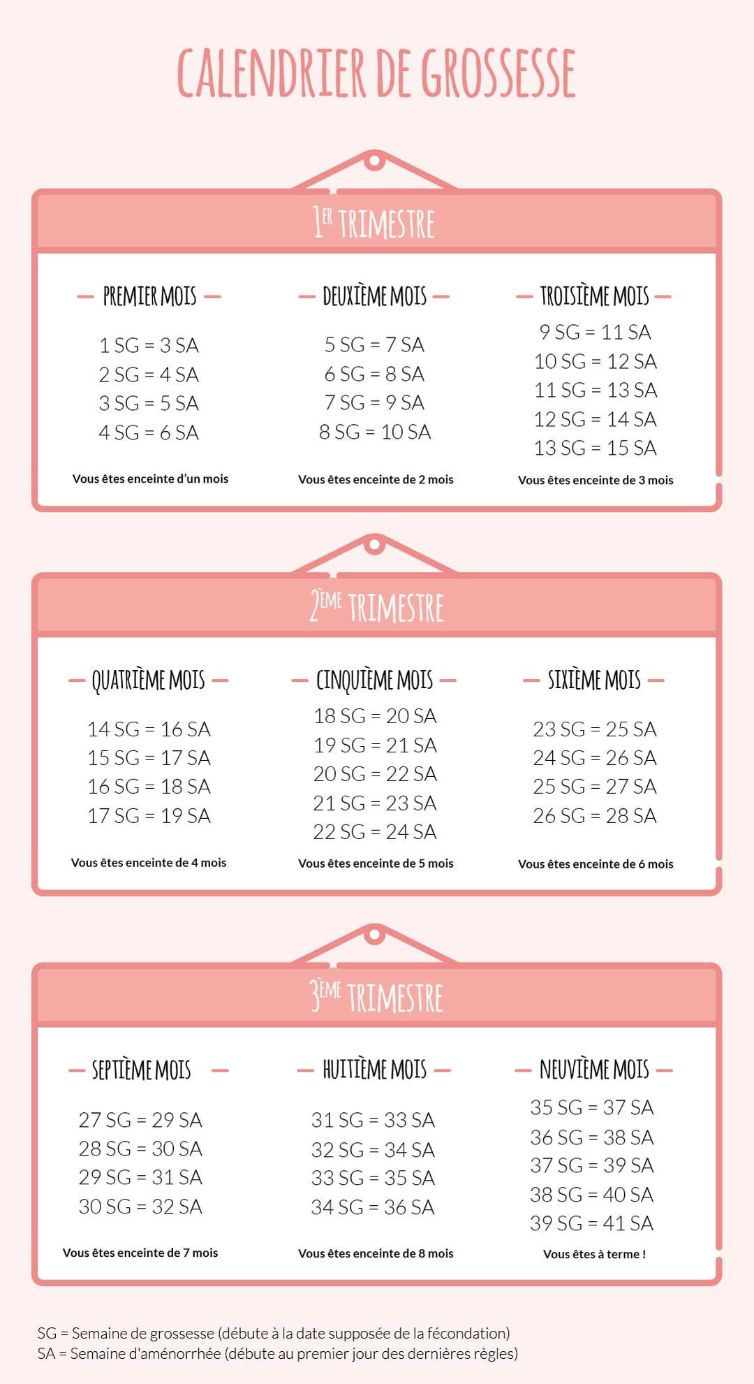 calendrier-de-grossesse-semaines-amenorrhee