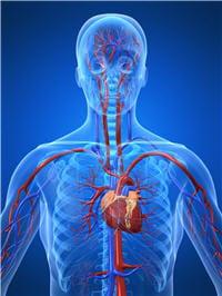 les accidents cardiovasculaires sont plus graves chez la femme ménopausées que