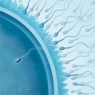 ovulation calculer sa date d 39 ovulation facilement. Black Bedroom Furniture Sets. Home Design Ideas