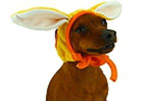 bonnet lapin pour chien