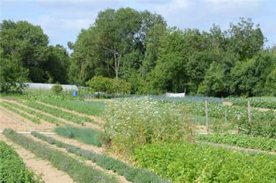 le jardin du chef est une ancienne terre maraîchère d'un hectare.