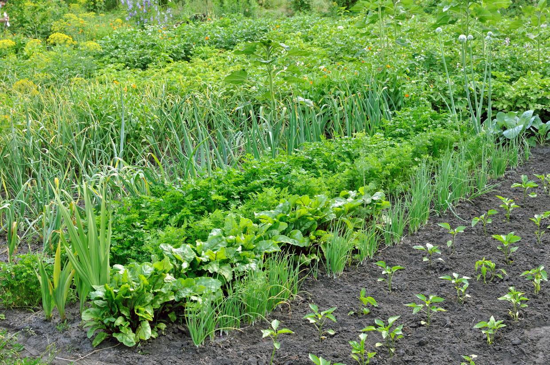 Que Faire Dans Le Potager En Fevrier potager : guide pour créer son jardin potager et cultiver