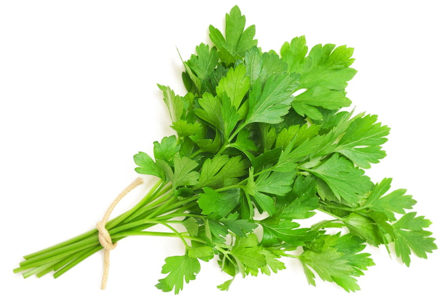 Everything about parsley: choosing it, cooking it, storing it ...