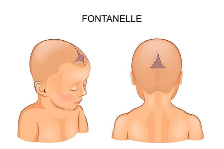fontanelle-bebe