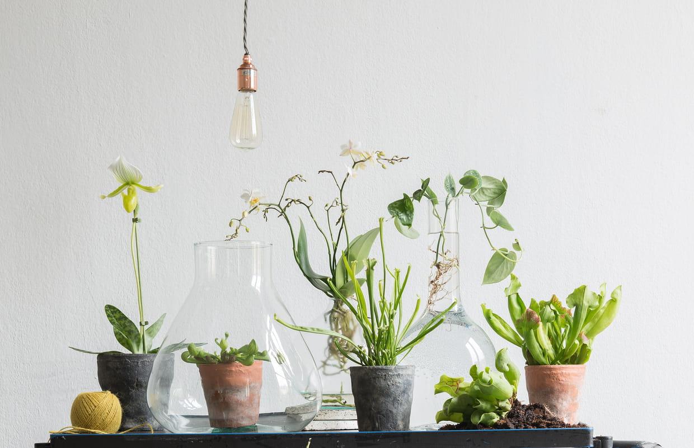 Les Filles De L Air Plante ces plantes d'intérieur qui sont tendance