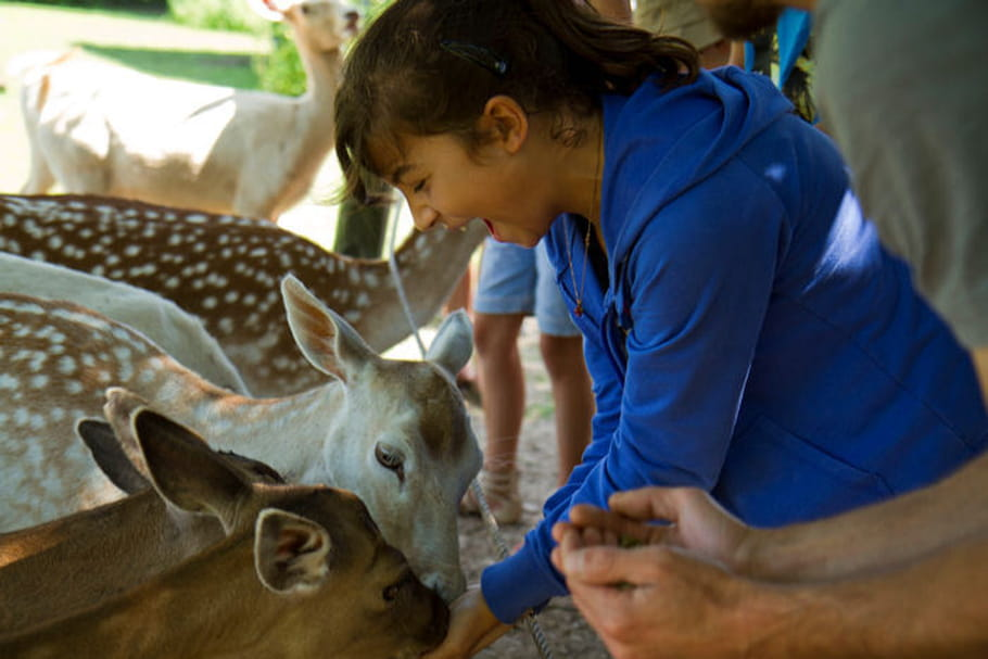 Parc animalier de Sainte-Croix: explorez les merveilles de la nature!