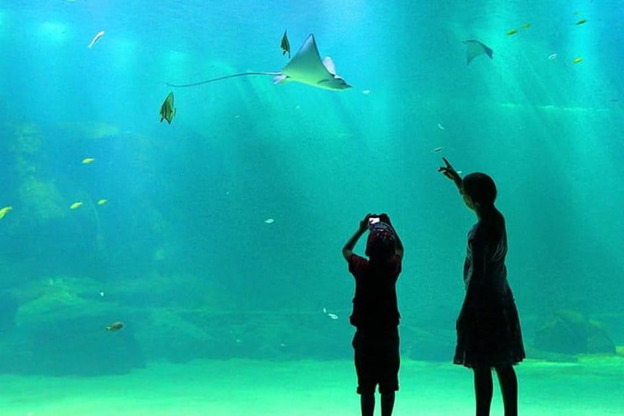 Nausicaa: le plus grand aquarium d'Europe!