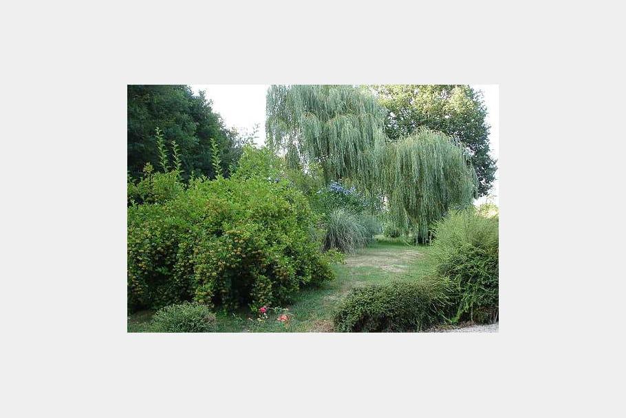 Un jardin d 39 arbres auvergnat vos plus beaux jardins en for Beaux arbres de jardin