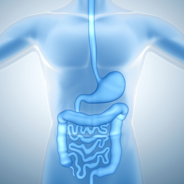 Appareil digestif: anatomie, schéma, maladies, examens