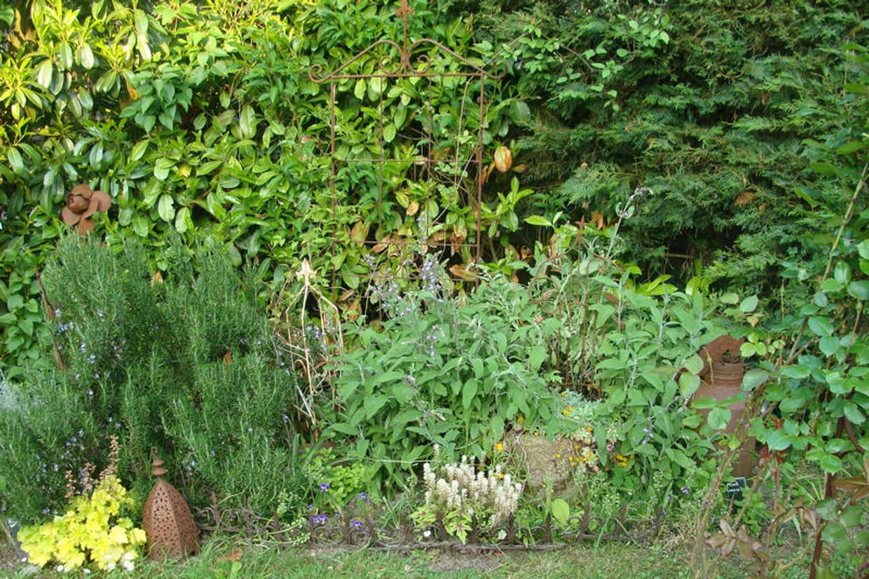 Quelques plantes aromatiques for Jardin plantes aromatiques