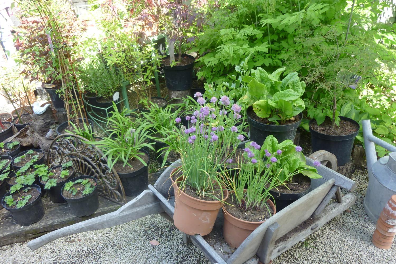 Préparer l'arrivée du printemps au jardin et au potager