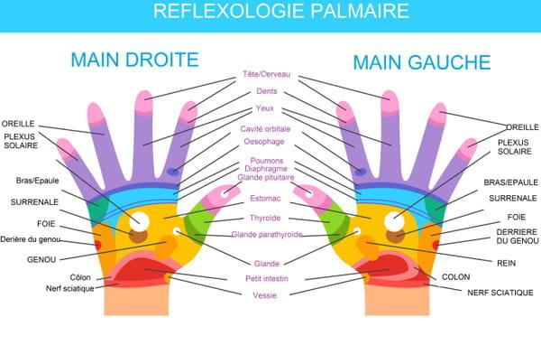 Carte de réflexologie palmaire (main)