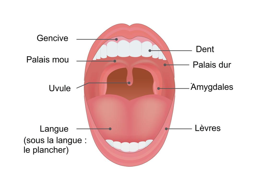 Papillomavirus traitement bouche