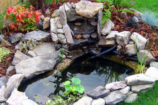 Bassin et rocaille