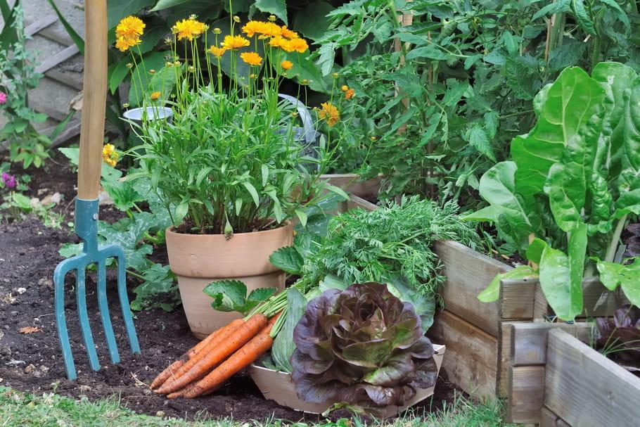 jardiner pas cher les 9 astuces conna tre. Black Bedroom Furniture Sets. Home Design Ideas