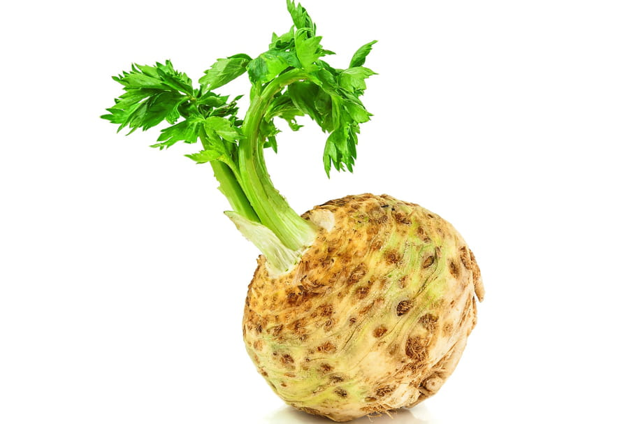 APIO: Todo sobre esta verdura, elige apio o ...