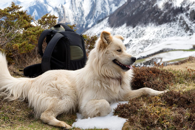 Montagne des Pyrénées