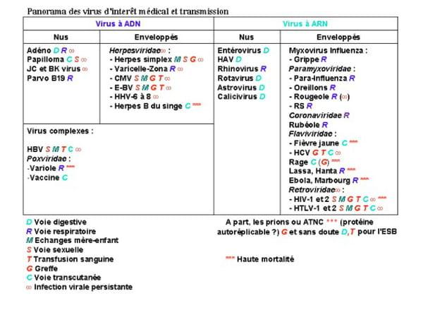 classification des virus ADN et ARN