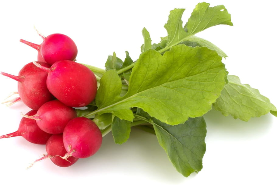 Radis tout sur cette crudit les diff rents types de - Quand cueillir les radis ...