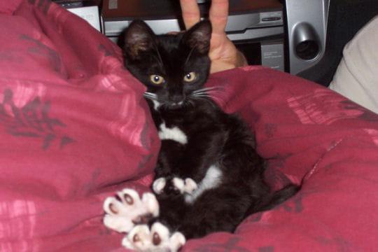 Caline, un petit chat incroyable mais vrai