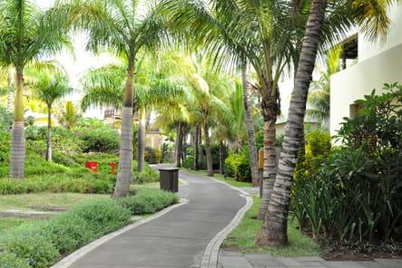 Végétation exotique et luxuriante