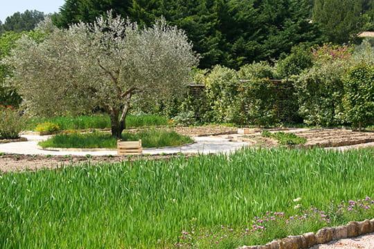 Merveille d'un jardin potager