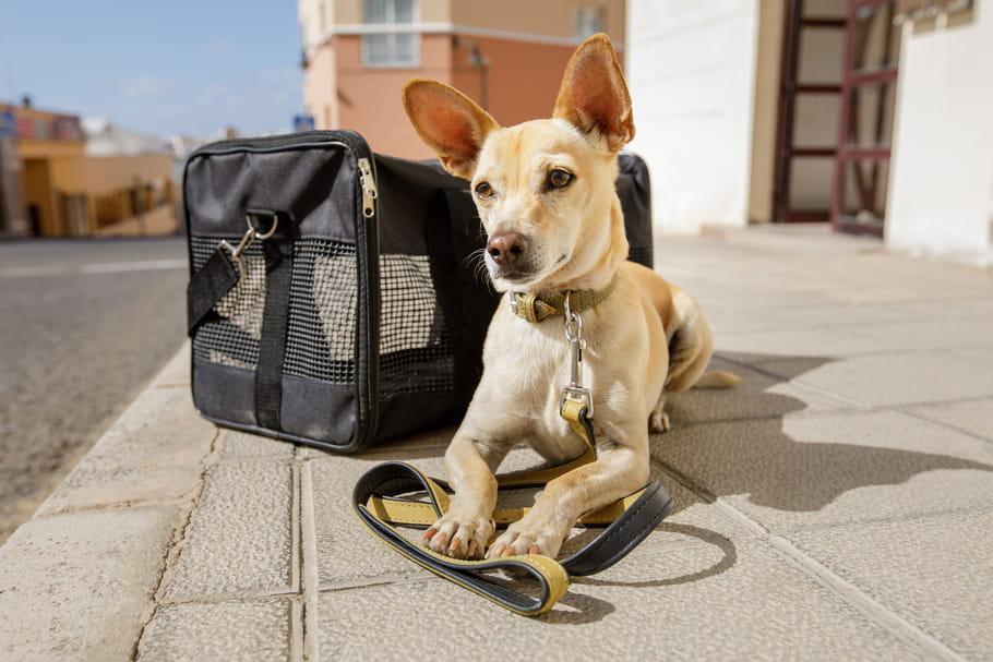 Meilleurs sacs de transport pour chiens: que choisir?