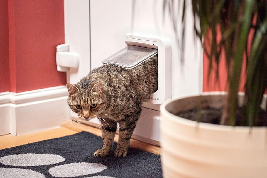 Meilleure chatière: notre sélection de cet accessoire pour chat et petit chien