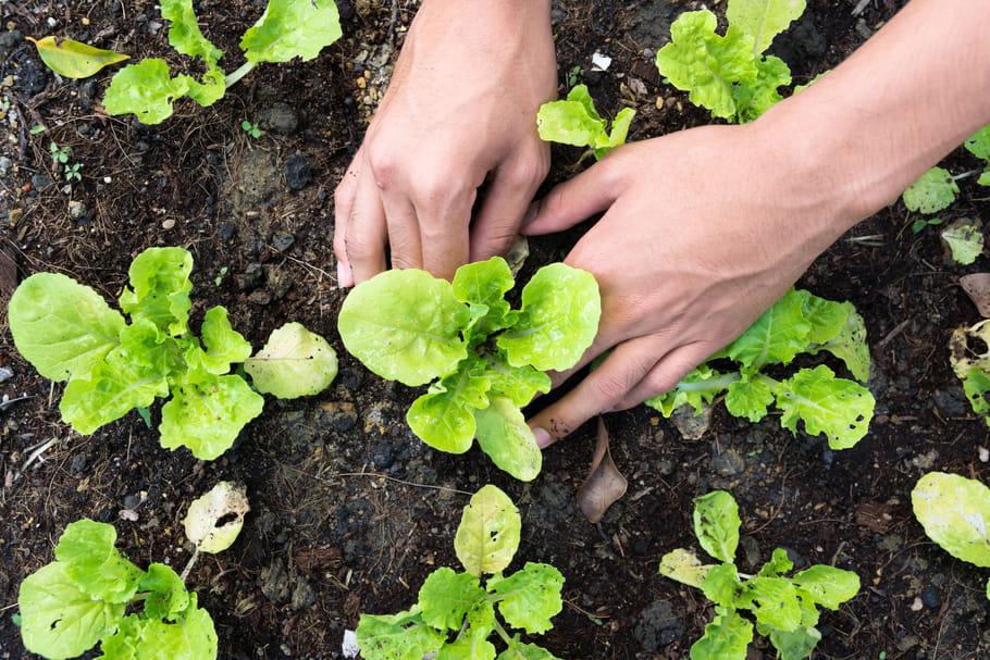 Que faire au potager en mars - Que planter en mars au potager ...