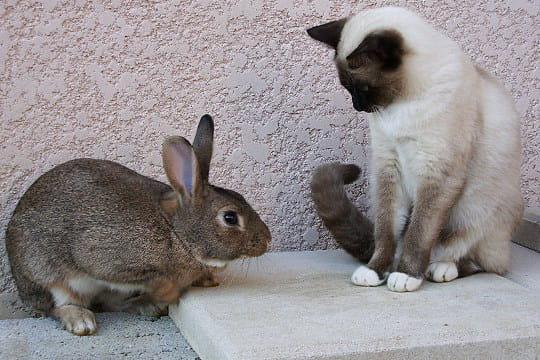 L'incroyable amitié entre un lapin et un chat