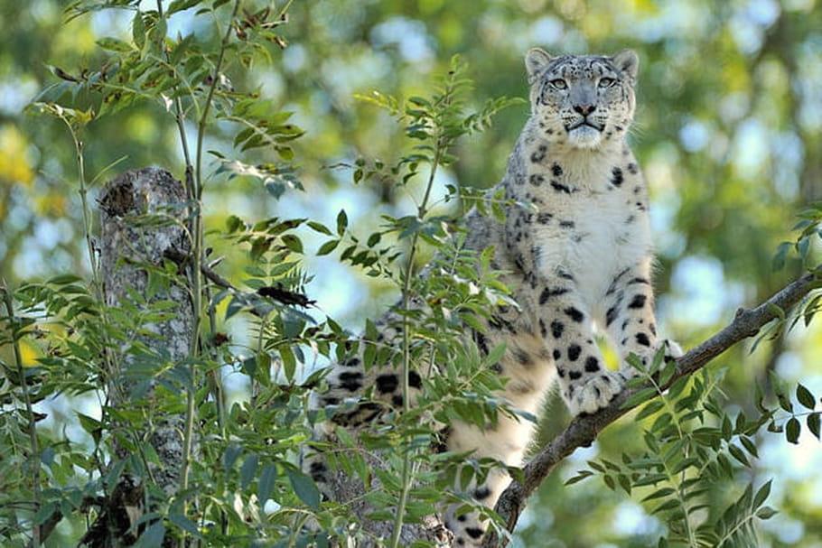 Le Parc des Félins : un zoo pas comme les autres