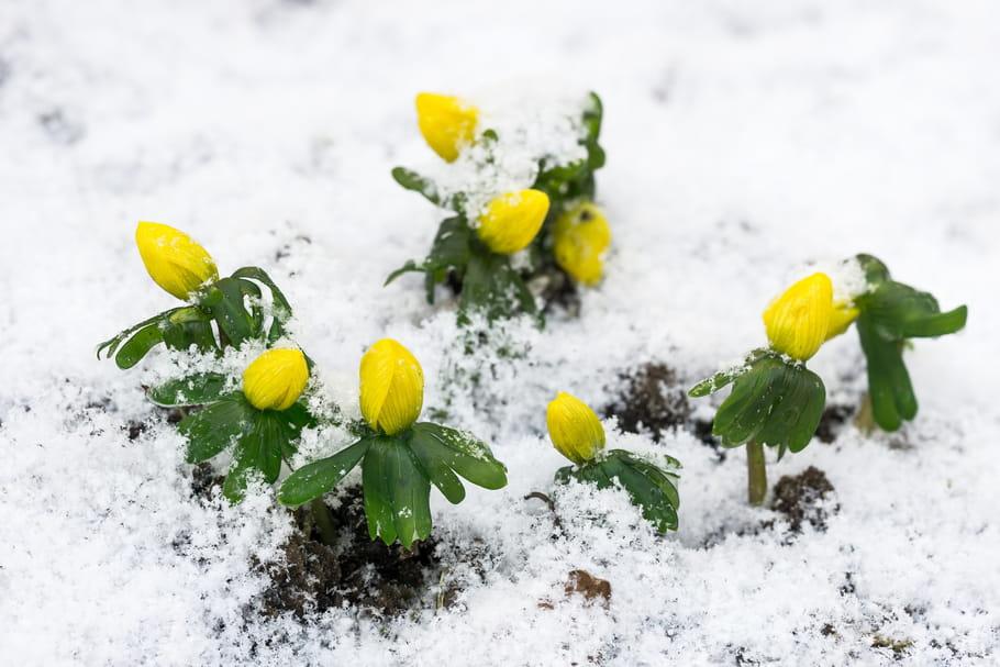 Comment gérer le redoux au jardin en plein hiver ?