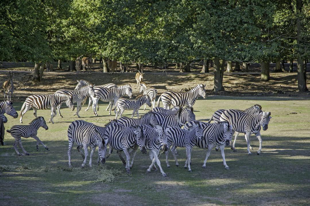 safari-voiture-zoosafari-thoiry