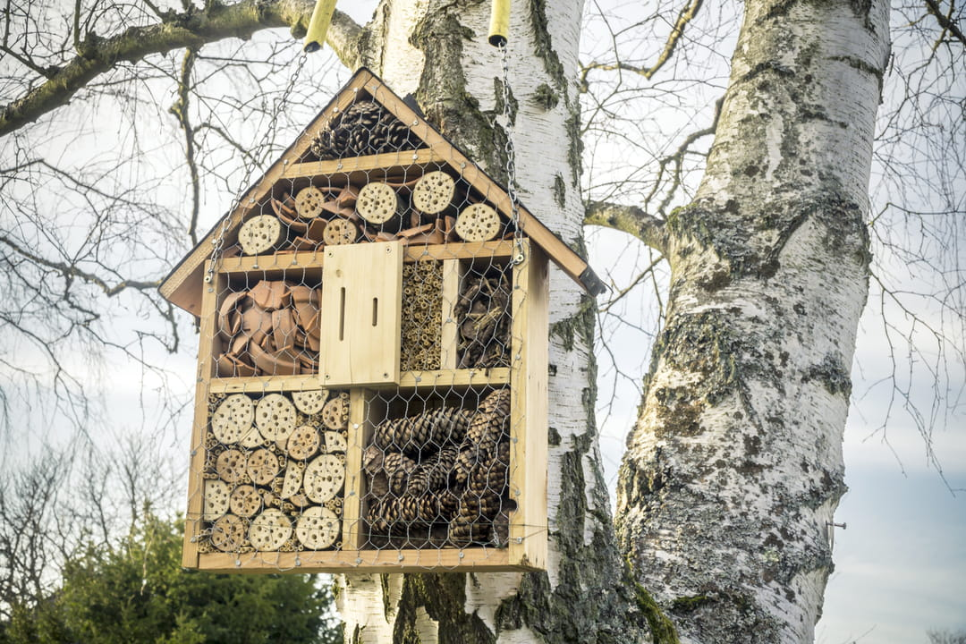 hotel-a-insectes-dans-les-arbres