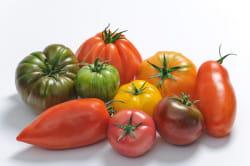 les variétés anciennes de tomates connaissent un franc succès.