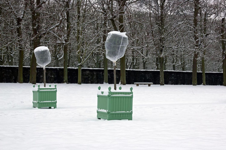 Protéger ses plantes du froid et les aider à passer l'hiver