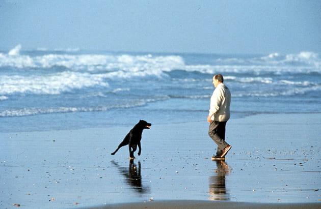 François Mitterrand et son chien, au bord de l'Atlantique (1991)