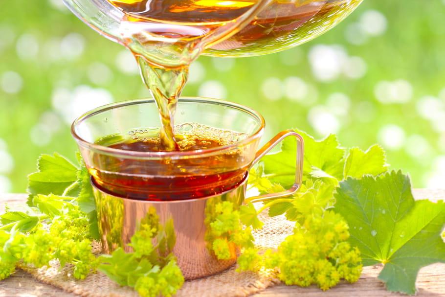 Alchémille: propriétés, posologie de la plante médicinale