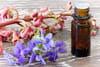 Les fleurs de Bach pour mincir