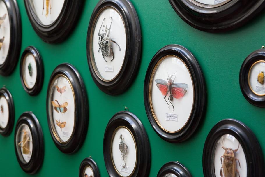 Le truc à chiner : le cadre Napoléon III