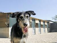 le refuge devra accueillir un nombre limité d'animaux.