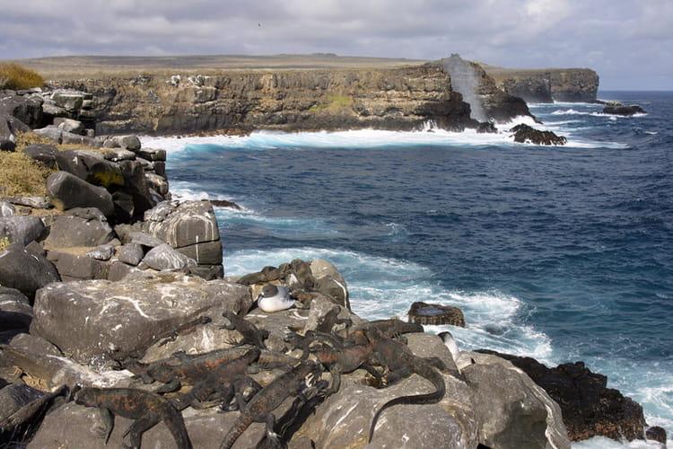 les iguanes marins se chauffent sur la falaise photo jean paul calvet