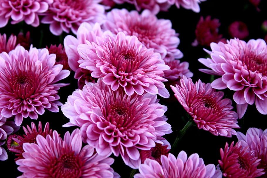 Fleurs de saison : quelles variétés en automne ?