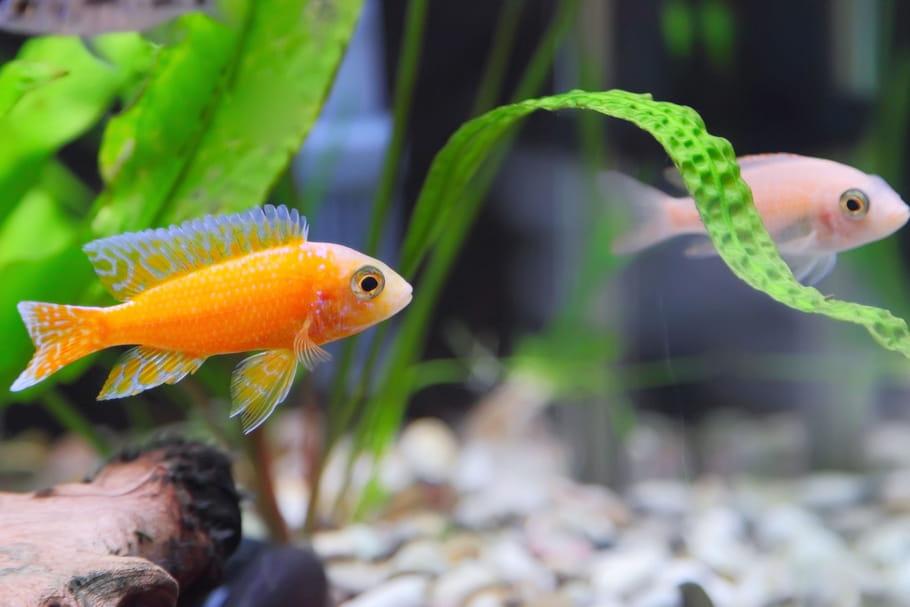 Meilleure décoration aquarium: comment l'aménager?