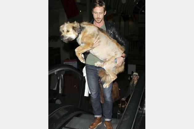 Ryan Gosling porte son chien George