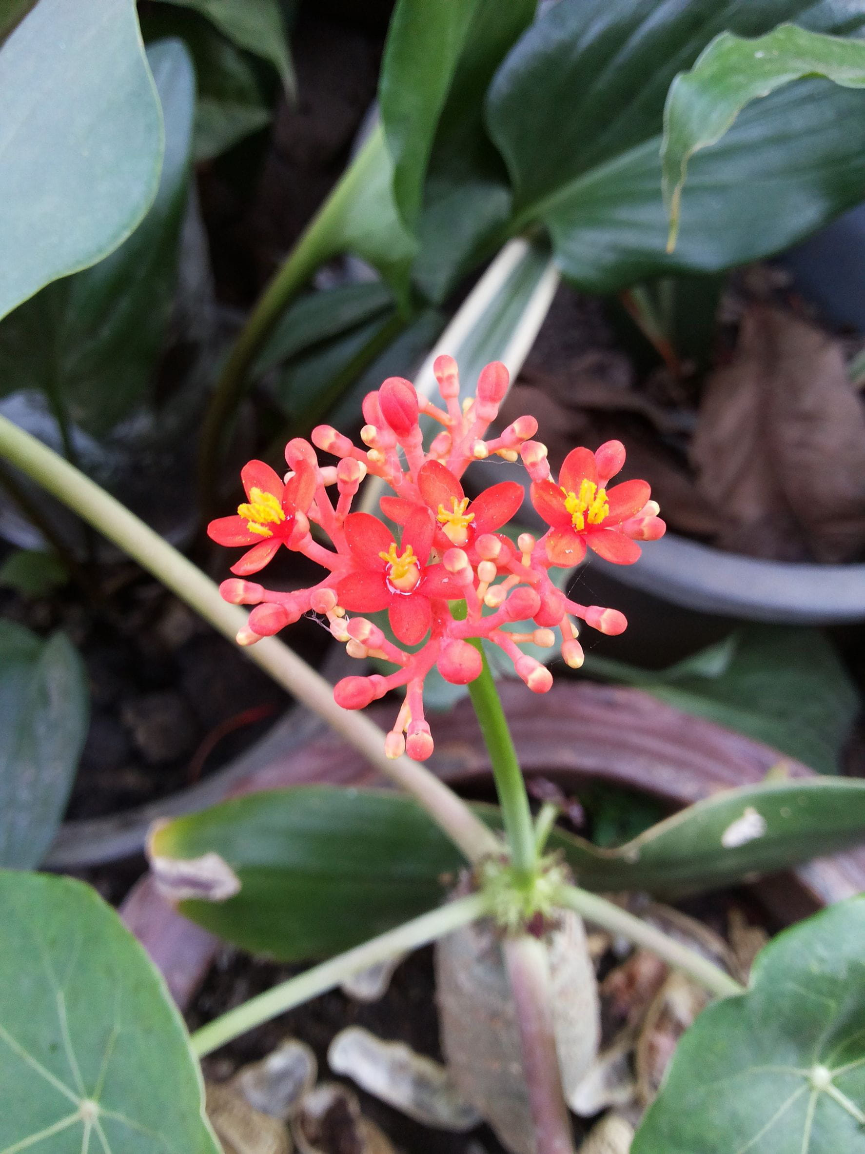 Petites Plantes Fleuries En Pot 8 plantes exotiques pour le balcon