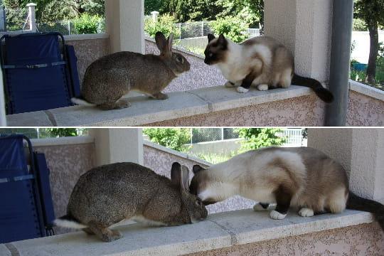 Un baiser perché
