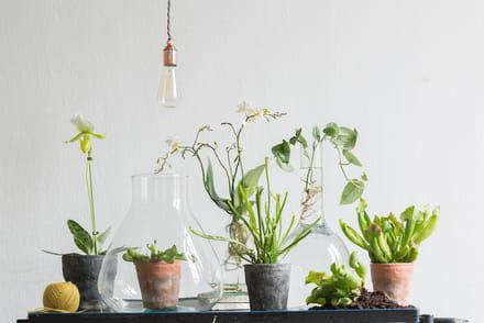 Plante verte d 39 int rieur ou d 39 exterieur conseils et for Fushia plante interieur ou exterieur