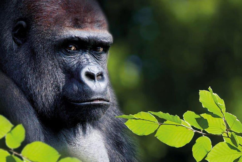 La Vallée des Singes: au plus près des primates